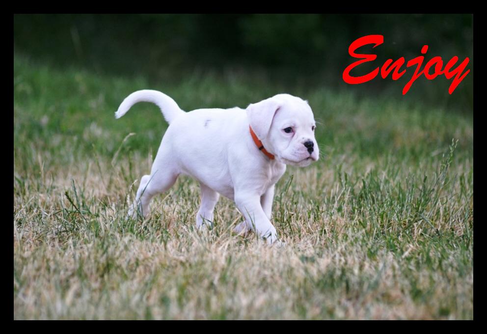 Enjoy13