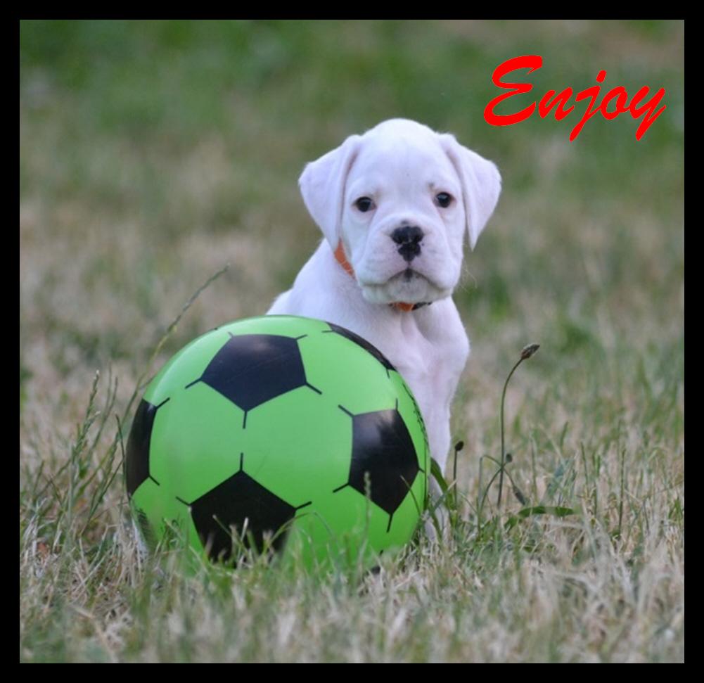 Enjoy14