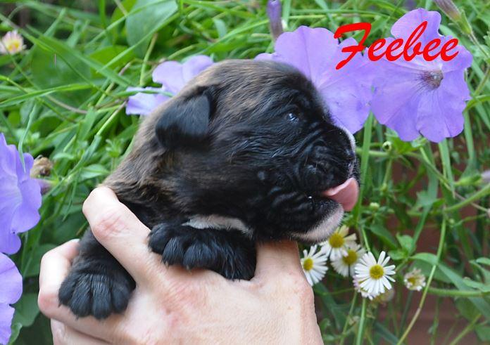Feebee 2