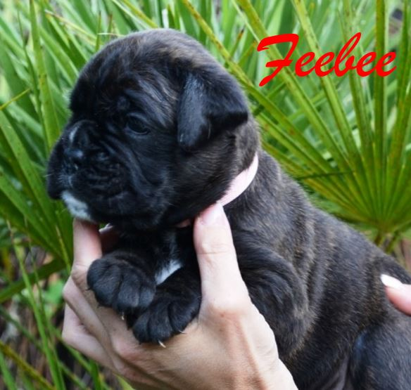 Feebee 4