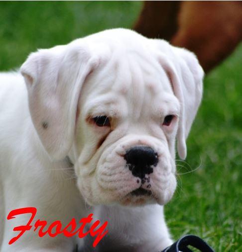 Frosty Neu